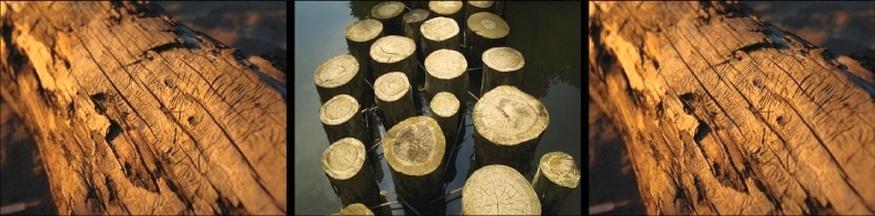עץ ממוחזר