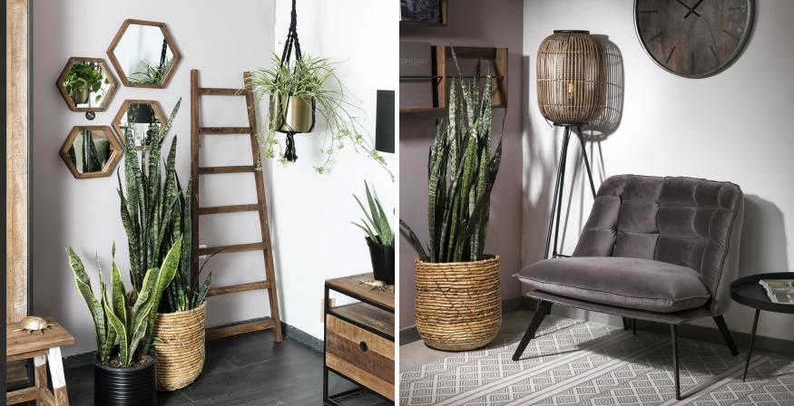 צמחים ועציצים בבית